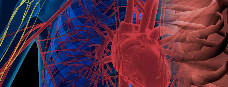 Illustration of nerve and cardiovascular anatomy