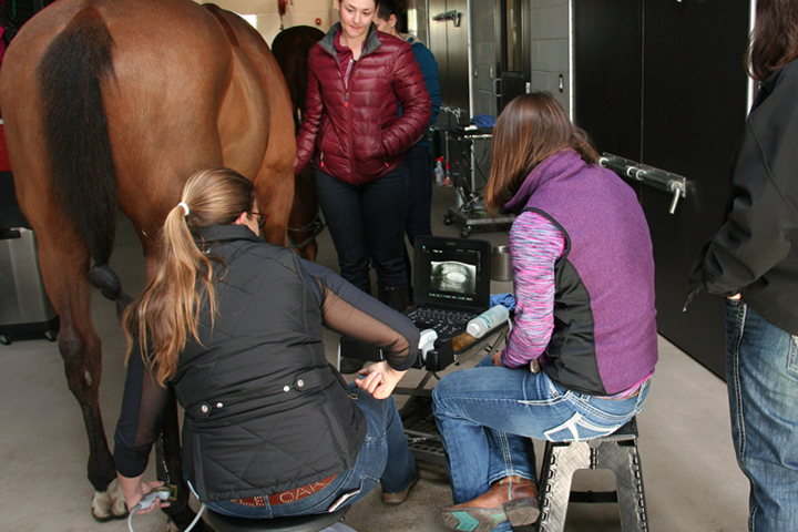 Veterinarian using SonoSite ultrasound for equine medicine