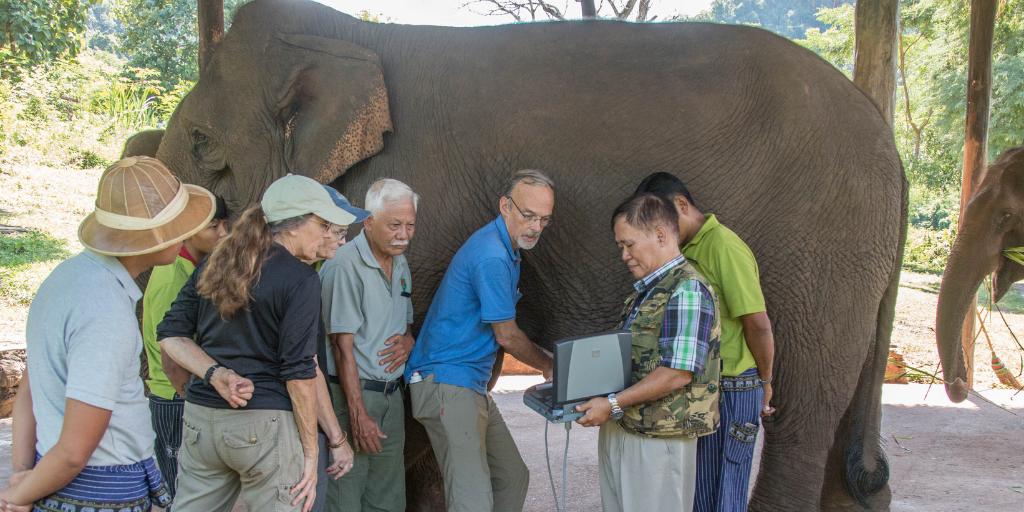 Блог SonoSite: применение УЗИ в диагностике и лечении заболеваний слонов