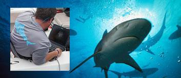 scanning-sharks