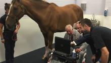 SonoSite Edge II for Equine veterinary ultrasound