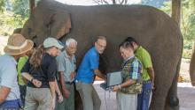 SonoSite Blog: ecografía para medicina para elefantes