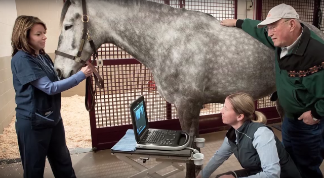 Point of Care Ultrasound Plays a Big Role in Equine Sports Medicine   This video courtesy of Wisconsin Equine Clinic and Hospital, Dr. Jo-Anne LeMieux discusses ultrasonography and its use in her daily practice. SonoSite Edge ultrasound plays a big role